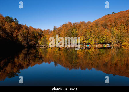Forest in Bolu. Turkey - Stock Image