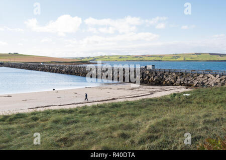 man walking on beach next to Churchill Barrier no 3 causeway, linking the islands of Glimps Holm and Burray, , Orkney, Scotland, UK - Stock Image