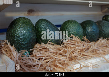 Row of big green organic avocados in a wooden shelf - Stock Image