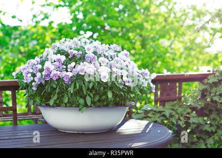 Pansy flowers in shades of lilac, violet and blue in a white vintage wash basin on a balcony table in bright sunlight, copy or text space - Stock Image