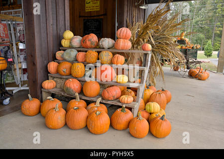 Pumpkins and gourds on display for sale at a local farm market, Sweet Creek, for the Halloween and Thanksgiving holiday decoration or decorating. - Stock Image
