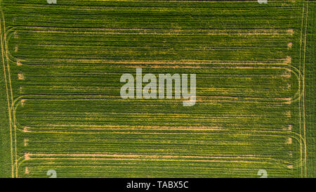 Tractor pattern on green field, aerial top down photo. - Stock Image