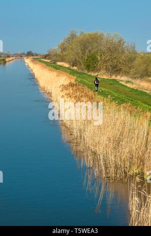 Burwell Lode at Wicken Fen, Cambridgeshire, East Anglia, England, UK. - Stock Image