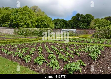 Victorian Kitchen Garden in Devon, UK - Stock Image