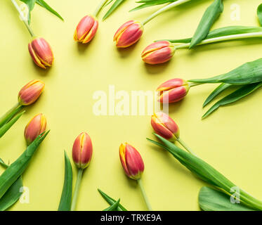 Delicate fresh tulips on yellow background. Top view. - Stock Image