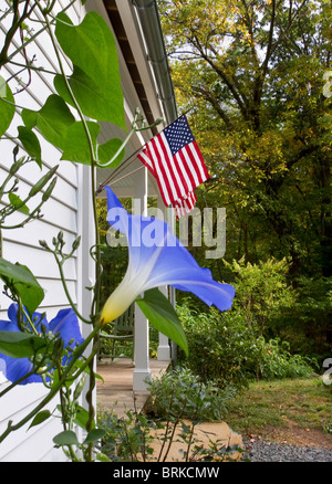 White farm house porch with vibrant blue morning glories in front of American flags - Stock Image
