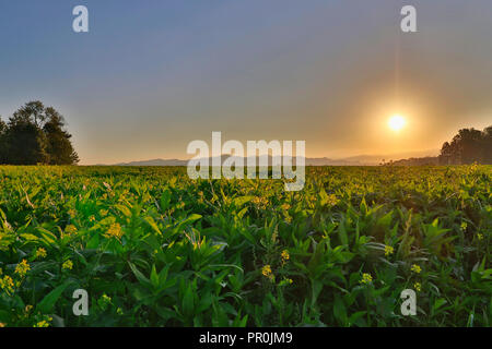 Field and sunrise - Stock Image