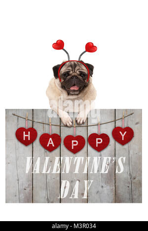 Cute pug puppy dog leaning on wooden fence of used scaffolding wood with red hearts and text happy valentines day, - Stock Image