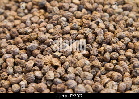 Tiger nuts basic ingredients for local Horchata drink Valencia Spain - Stock Image