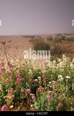 beach with flowers - Stock Image