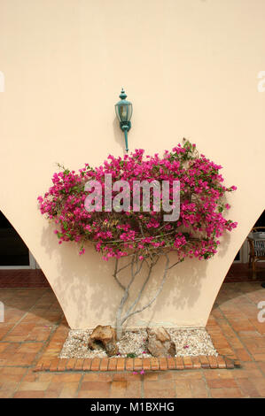 Beautiful flowering plants under the wall. Interior decoration with fresh flowers - Stock Image