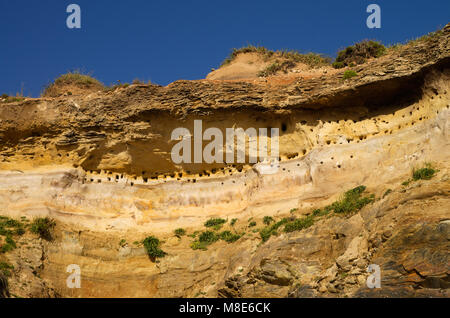 Perspective from below of a high sandstone cliff by the beach packed with holes that are the swallow nesting places. - Stock Image