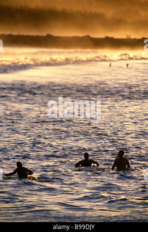 Surfers waiting for a wave at sunset - Stock Image