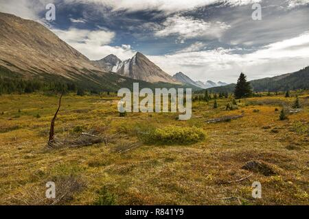 Early Autumn Landscape Hiking at Cottongrass Meadows with view of distant Rocky Mountain Peaks in Banff National Park - Stock Image