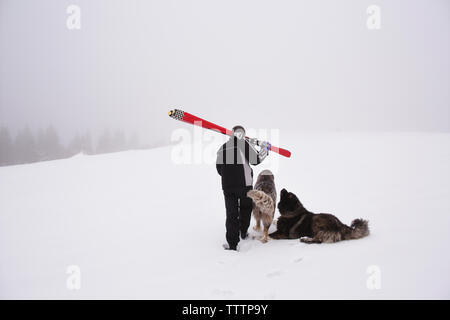 Rear view of man carrying ski while walking with dogs on snowy landscape - Stock Image