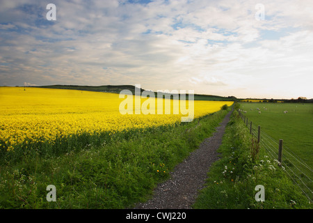 Footpath to The Chilterns - Stock Image