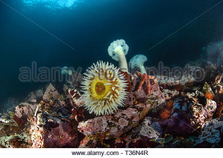 Sunlight on a reef - Stock Image