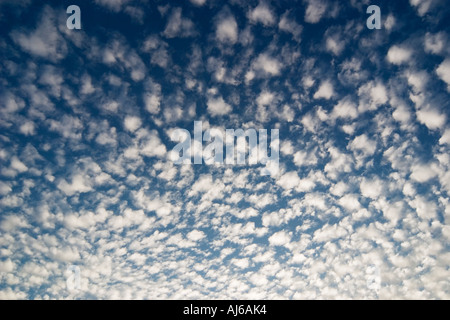 Altocumulus clouds against a blue sky - Stock Image
