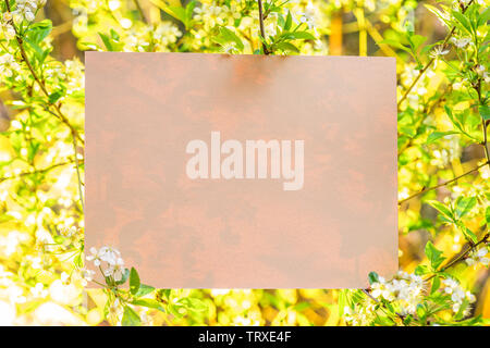 Paper blank between cherry branches in blossom. - Stock Image