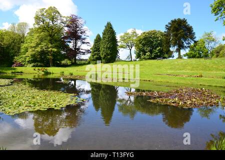 Lake in pretty gardens, Devon, UK - Stock Image