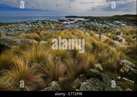 Rocky shoreline - Stock Image