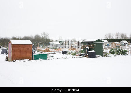 Allotment plots in the Winter snow. - Stock Image