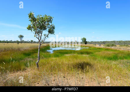 View of pretty lush wetlands with blooming water lilies, Cape York Peninsula, Far North Queensland, FNQ, QLD, Australia - Stock Image