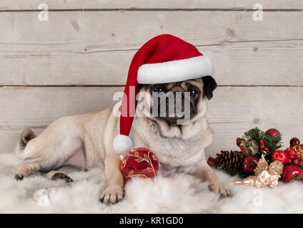 lovely Christmas pug dog puppy lying down on sheepskin blanket with festive ornaments and weathered wooden background - Stock Image