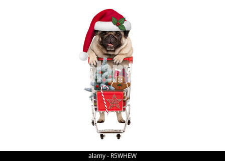 cute happy seasonal pug puppy dog with shopping cart full of christmas decoration, candy and tree, isolated on white background - Stock Image