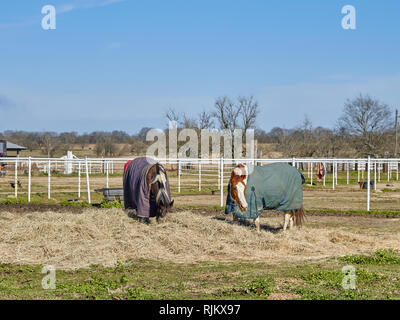Two horses wearing cold weather or winter blankets eating hay in a fenced coral in rural Alabama, USA. - Stock Image