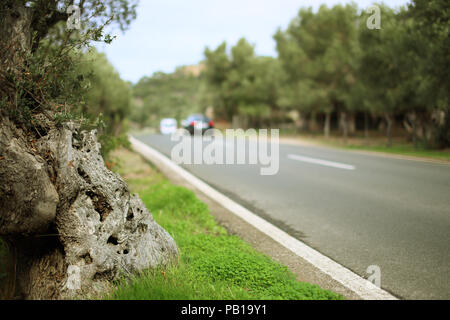 Ancient olive trees in northern Mallorca, Spain - Stock Image