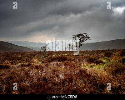 Single tree and bush in a remote area of Exmoor National Park, UK - Stock Image