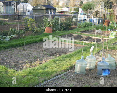 View of an allotment in Fulham, London UK - Stock Image