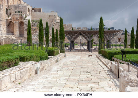 Cat walking through the Old City of Jerusalem on the southern side of the Temple Mount, Israel - Stock Image