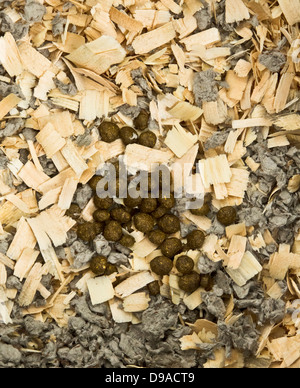 Rabbit poop on a bed of wood shavings and paper litter - Stock Image