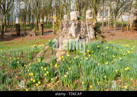Spring daffodils and carved heads in the gardens of Ushaw College, Co. Durham, England, UK - Stock Image