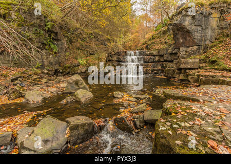 Autumn colours in woodland by a waterfall on Bowlees beck, Teesdale, North Pennines AONB, UK - Stock Image