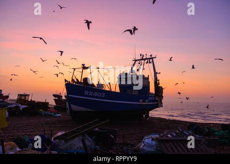 Hastings, East Sussex, UK. 23rd February 2019. Seagulls swirl round Hastings fishing boat at a misty sunrise on a very mild morning on the Stade Old Town beach, on what promises to be a clear warm and sunny day. Credit: Carolyn Clarke/Alamy Live News - Stock Image