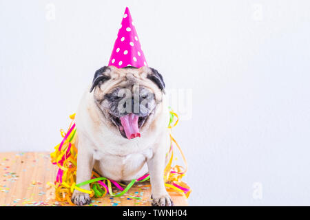 Party and event celebration fun concept with laxy and tired funny pug dog with hat and confetti making yawn and wait to go sleep - nice animal with wh - Stock Image