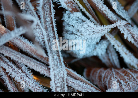the onset of winter, cold and morning frost Jane Ann Butler Photography  JABP1810 - Stock Image