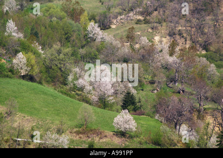Rocks and vegetation of the Sibillini National Park Mountains of Le Marche Italy - Stock Image