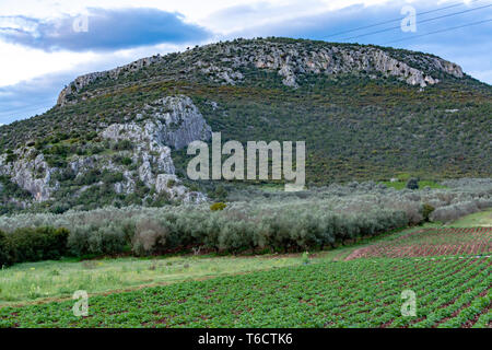 Farm field with rows of young of potato plants growing outside under greek sun in mountains, agriculture in Greece. - Stock Image