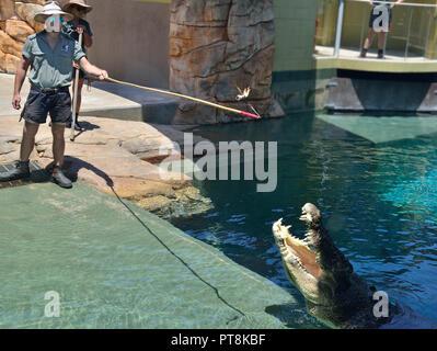 Crocodile feeding time at Crocosaurus Cove, Darwin, Northern Territory, Australia - Stock Image