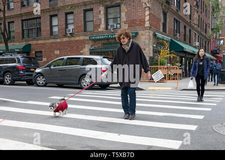 A middle aged woman walking her small dog on University Place in Greenwich Village, Manhattan, New York City. - Stock Image