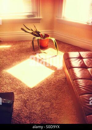 Interior sunlight - Stock Image