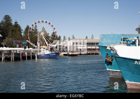 View across Fremantle's Fishing Boat Harbour with the Tourist Wheel in the background. Western Australia. - Stock Image