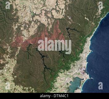 Forest Fire Burn Scar near Sydney Australia - Stock Image