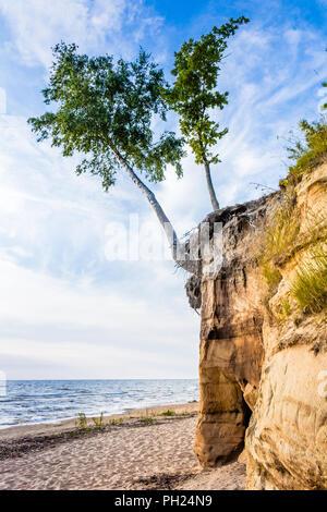 Birch on rhe sand dune - Stock Image