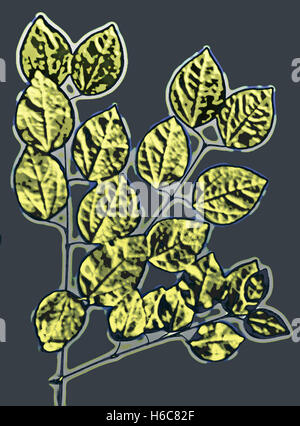 Golden Leafs. Photography digitally adjusted - Stock Image