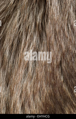 Long hair fur background close up full frame. - Stock Image